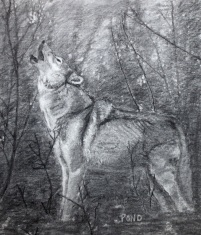 """The Wolf"" Charcoal Drawing, age 16"