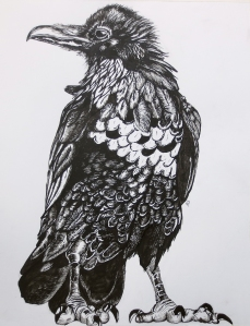 """The Raven"" pen & ink, Amy Schubert, age 16"