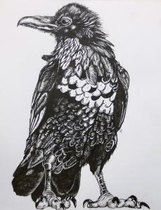 """The Raven"" pen & ink, Amy Schubert, age 16"